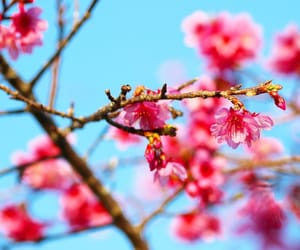 blue, cherry blossom, and flowers image