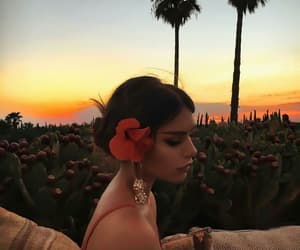 summer, sunset, and flowers image