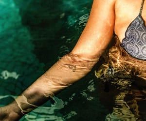 animal, body, and pool image