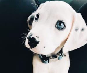 Animais, pets, and tumblr image
