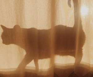 cat, shadow, and aesthetic image