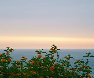 flowers, sea, and clouds image
