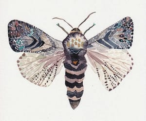 art, pretty, and moth image
