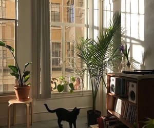 cat, aesthetic, and plants image