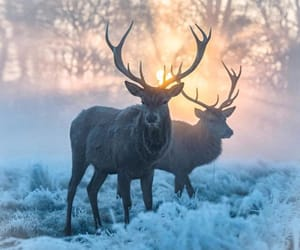 deer, forest, and magic image