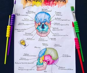 anatomy, dentist, and student image