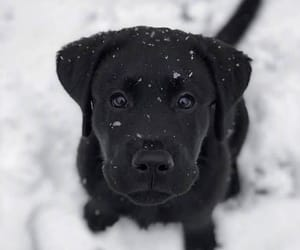 black, dog, and puppies image