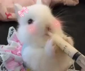 cute, bunny, and pink image