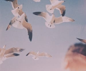 bird, sky, and vintage image