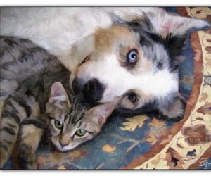 cats and dogs image