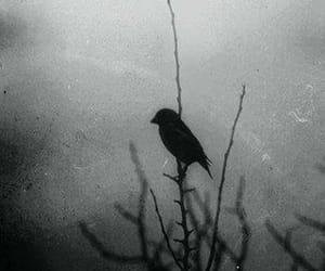black and white, madness, and dark image