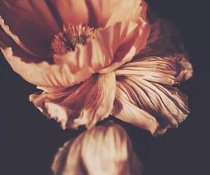 flowers image