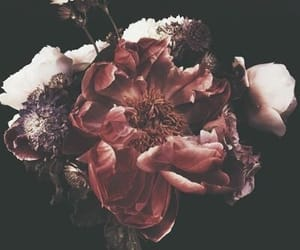 aesthetics, florals, and flowers image