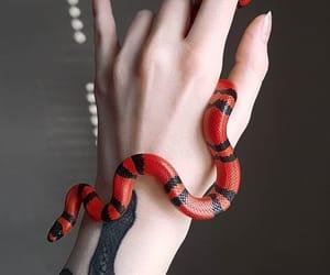 serpent image