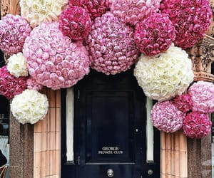 flowers and fashion image
