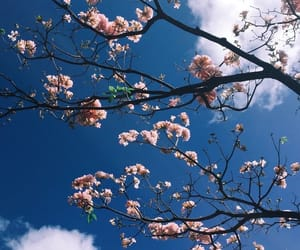 flowers, sky, and background image