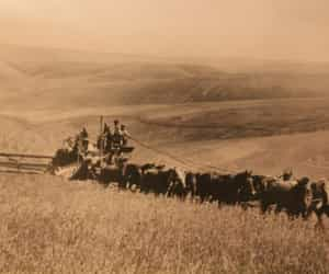sepia, harvest, and harvest time image