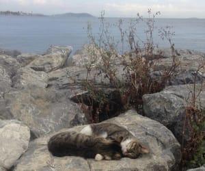 cat, sea, and animal image