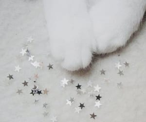 aesthetic, cat, and mittens image