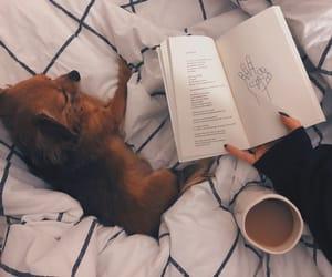 animals, books, and evening image