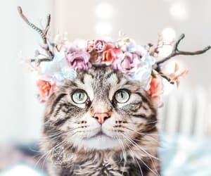 animals, Gatos, and kitten image