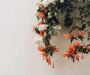 flowers, white, and orange image