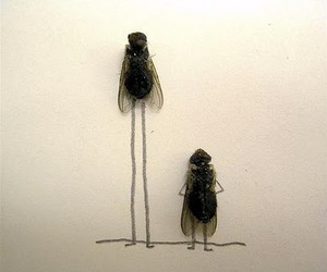 art, flies, and fly image