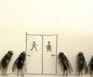 flies, art, and fly image