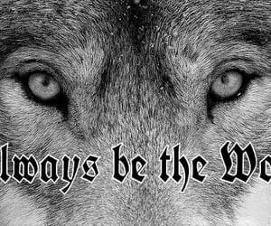 always be the wolf image