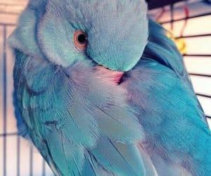 bird, animal, and beautiful image