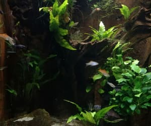 aquarium, copyright, and seaweed image