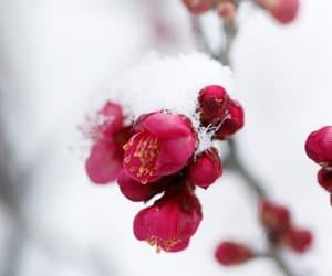 flor, rojo, and blanco image