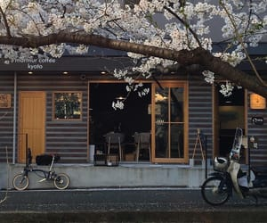 japan, aesthetic, and cherry blossom image