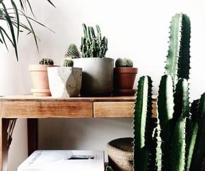 beautiful, books, and cacti image