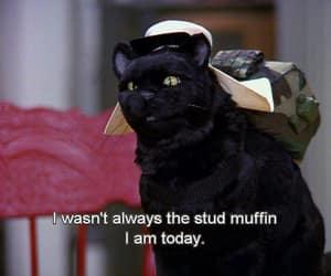black cat, stud, and cat image