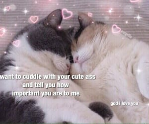 cats, soft, and wholesome image