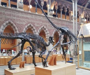 aesthetic, animal, and museum image