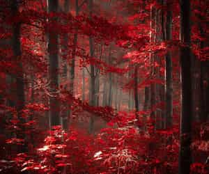 trees of color, forest of red, and woods of fire image