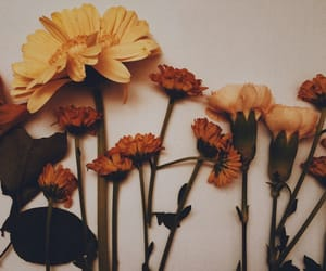 beautiful, film, and flower image