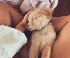 animal, cuddle, and soft image