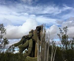 amazing, creosote bush, and beautiful image