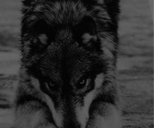animal, photograpy, and black and white image