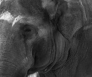 Animales, blanco y negro, and naturaleza image