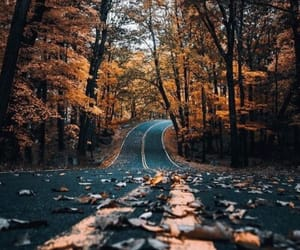autumn, fall, and mothernature image