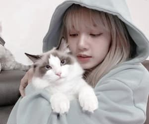 cat, lisa, and psd image
