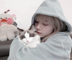 cat, Leo, and lisa image