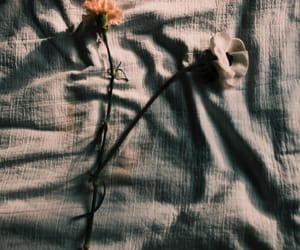 aesthetics, floral, and flowers image