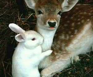 bunny, fawn, and white bunny image