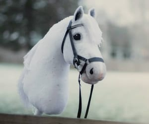 equestrian, horse, and white horse image