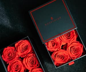 flowers, red, and love image